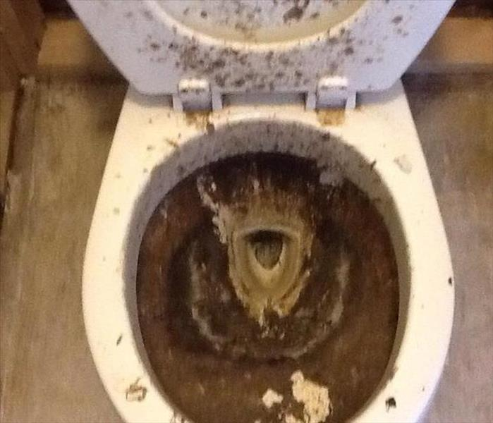 Sewage Backup Leaves Disgusting Toilet Before
