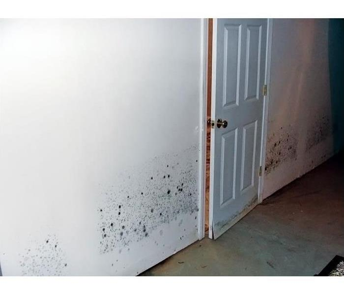"Mold Remediation What is ""Black Mold?"""