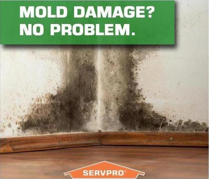 Commercial Commercial Mold Damage