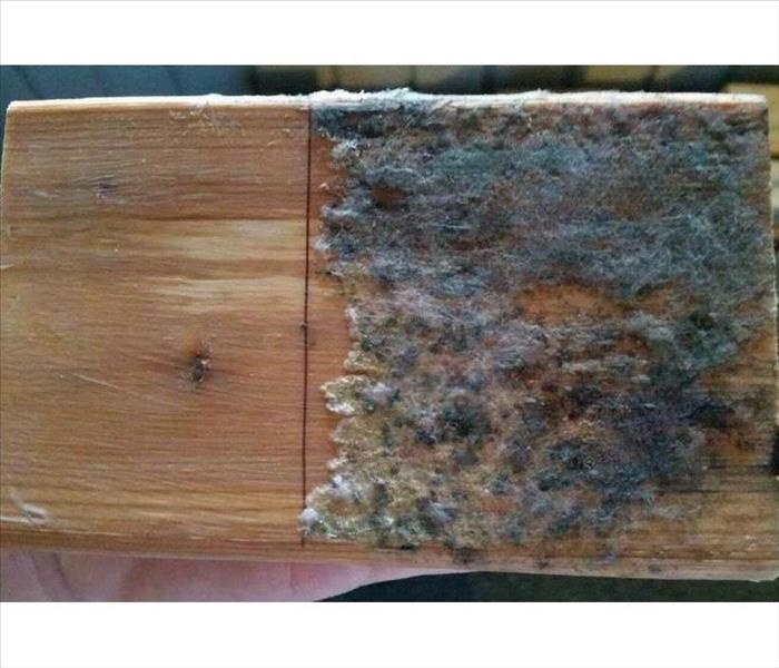 Mold Remediation Does Your Milford Home Have Mold?